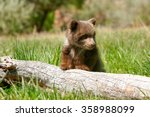 grizzly bear cub  ursus arctos  ...   Shutterstock . vector #358988099