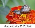snail macro - stock photo