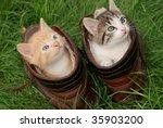 Couple Of Little Kittens...