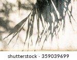 Leaf Shadow On Wall