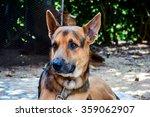 german shepherd looking...   Shutterstock . vector #359062907
