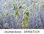 tree branches  covered with... | Shutterstock . vector #359067119