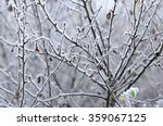 tree branches  covered with... | Shutterstock . vector #359067125