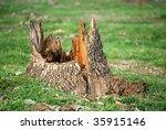 Maple Tree Stump On Grass