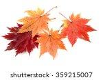 autumn maple leaves | Shutterstock . vector #359215007