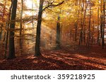 Beautiful Forest In Autumn ...