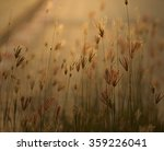 sun shine in the morning | Shutterstock . vector #359226041