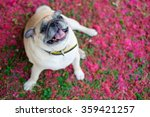 the pug dog sitting with... | Shutterstock . vector #359421257