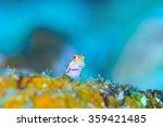 blenny | Shutterstock . vector #359421485