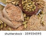 beer ingredients     hops ...   Shutterstock . vector #359554595