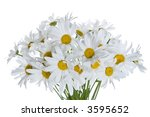 bouquet of camomiles on a...   Shutterstock . vector #3595652
