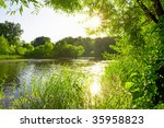 Old Pond In The Forest With Th...