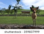 Small photo of front fae of a wild Japanese deers