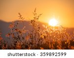 dry pink grass meadow in sunset | Shutterstock . vector #359892599