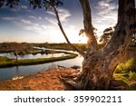 gum tree atop riverbank in... | Shutterstock . vector #359902211