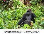 Stock photo portrait of a western lowland gorilla gorilla gorilla gorilla close up at a short distance 359923964