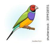 gouldian finch bird learn birds ... | Shutterstock . vector #359928551