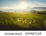rice field in the morning | Shutterstock . vector #359987159