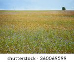 color meadow of cornflowers and ... | Shutterstock . vector #360069599