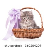 Cute Siberian Kitten In A...