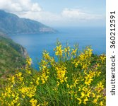 blooming broom at amalfi coast... | Shutterstock . vector #360212591
