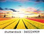Vibrant Tulips Field With Dutc...