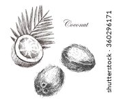 hand drawn coconut set.... | Shutterstock .eps vector #360296171