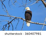 eagle on the boise river  idaho | Shutterstock . vector #360407981