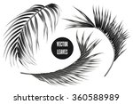 vector tropical monochrome palm ... | Shutterstock .eps vector #360588989