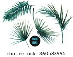 vector tropical palm leaves ... | Shutterstock .eps vector #360588995