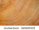 Wood Texture Of Cut Tree Trunk...
