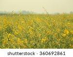 yellow field | Shutterstock . vector #360692861