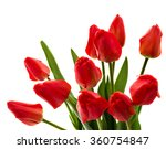 Bouquet Of Red Tulips On White...