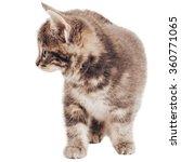 kitten isolated on white   Shutterstock . vector #360771065