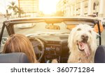 Stock photo woman and her dog driving on the car in los angeles dog watching behind and enjoying the wind in 360771284