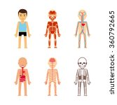 body anatomy vector... | Shutterstock .eps vector #360792665