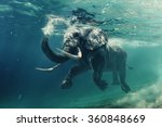Stock photo swimming elephant underwater african elephant in ocean with mirrors and ripples at water surface 360848669