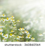 spring field   daisy in grass | Shutterstock . vector #360860564