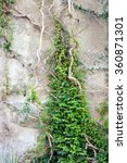 rock wall with plants | Shutterstock . vector #360871301