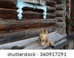 Sad Domestic Female Cat Sittin...