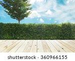 Grown Tree Wall And Ornamental...