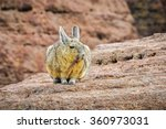 Small photo of Cute viscacha in the High Andean Plateau desert in Bolivia