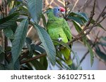 Small photo of Amazona brasiliensis