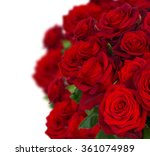 bouquet of fresh dark red roses ...
