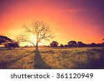 old oak in sunset with sun... | Shutterstock . vector #361120949