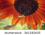sunflowers with bee