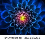 Blue Chrysanthemum Flower Macr...