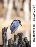 crane bird | Shutterstock . vector #361242089