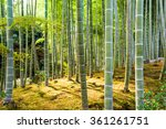 kyoto  japan at the bamboo... | Shutterstock . vector #361261751