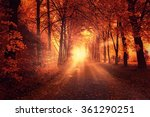 autumn landscape with sun light ... | Shutterstock . vector #361290251